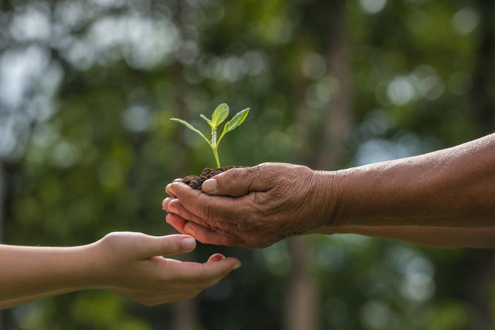 Nuestros valores en Harmony se basan en el amor a la naturaleza